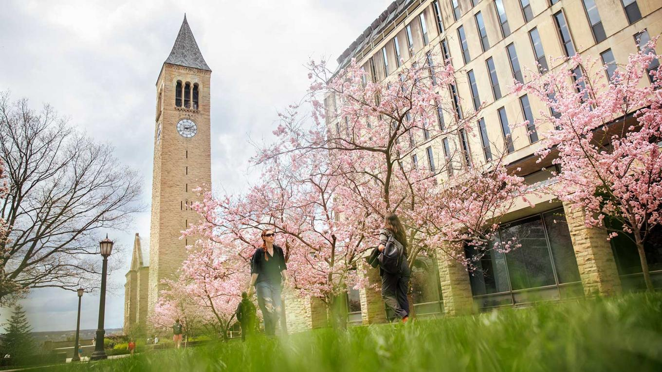 Students on campus under cherry blossoms