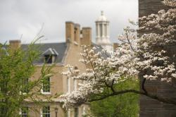 View of the cupola atop Ives hall seen over a tree branch of white blossoms