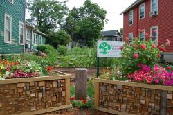 One of Grassroots Gardens lots on Buffalo's West Side